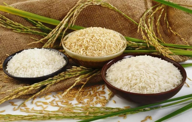 减少粮食损失浪费,促进世界粮食安全—— 国际粮食减损大会将在济南举办